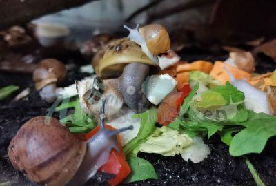 Auch die Minis werden abwechslungsreich Ernährt